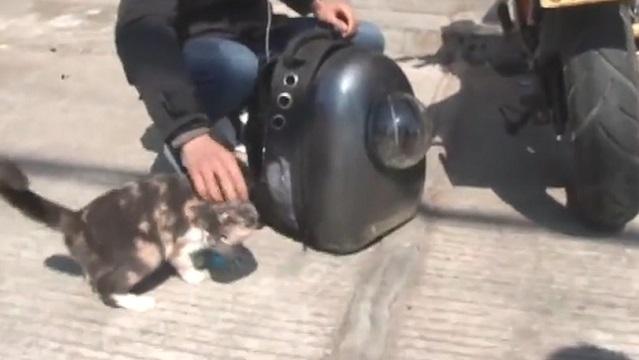 骑摩托背猫回家,女友怕冷猫不怕冷 猫:MMP